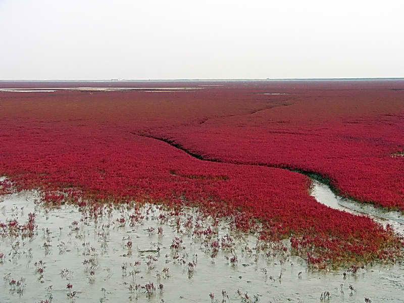 漂亮的红海滩[奇,灵,美,的博客] - 奇,灵,美, - 奇,灵,美
