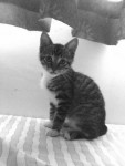 封面相片: Cats