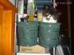 封面相片: 貓貓