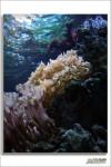 封面相片: My Salt Fish Tank